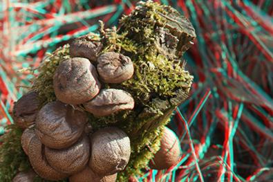 Fotografia 3D (Foto: Richard Bartz/Wiki Commons/Divulgação)